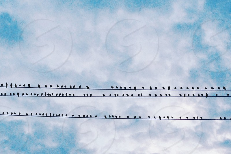 black birds on electric cord photo