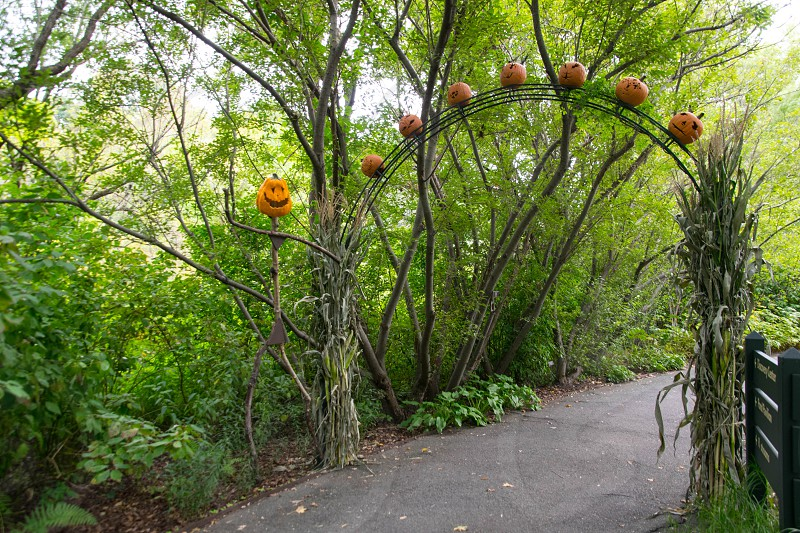 pathway with black arch and jack o lantern between green leaf trees photo