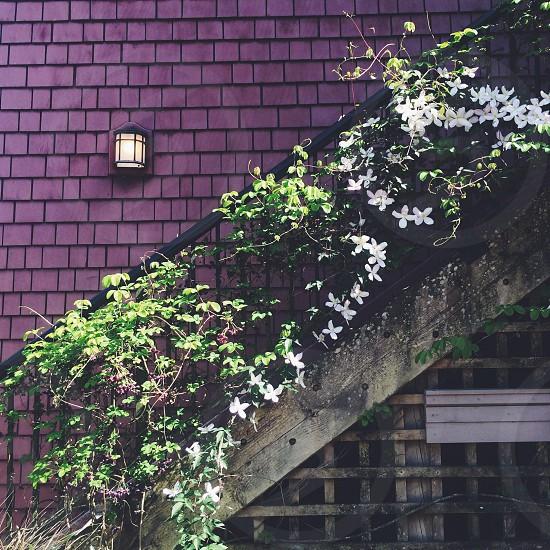 white flower plant on black metal stair railing photo