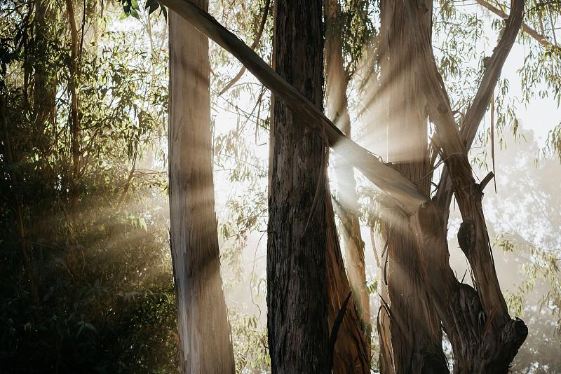 sun rays in foggy coastal forest  photo