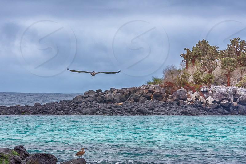 Santa Fe Island Galapagos photo