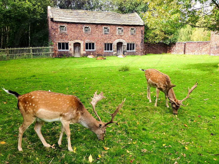 Deer countryside cottage photo