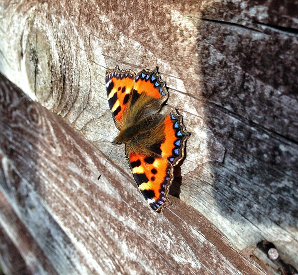Butterfly wood sun colourful beautiful drying basking  photo