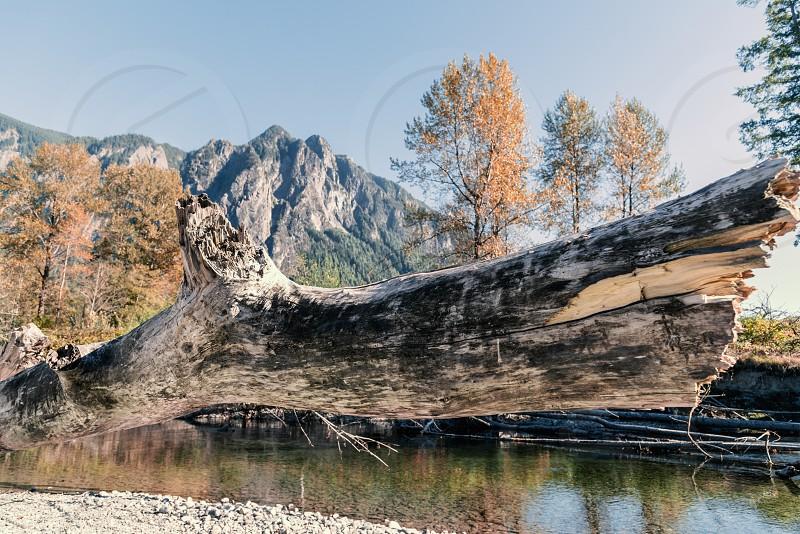 Mountain river in autumn. photo