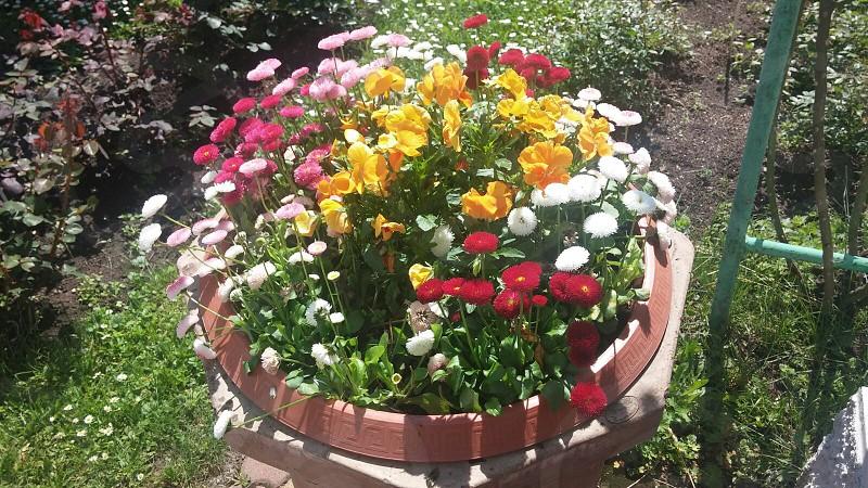 flowers colours nature beauty fragrance joy freedom kindness photo
