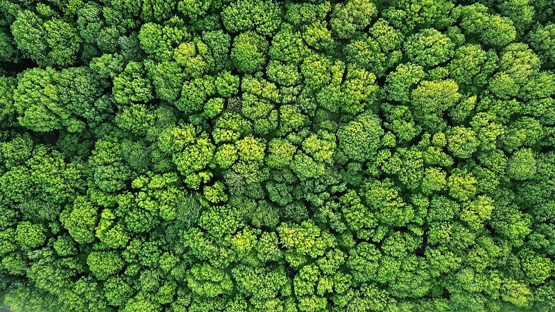 Aerial view green forest foliage summer warm sunlight. Natural green background. Photo by drone photo