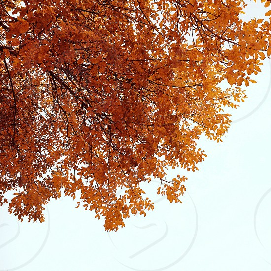 Autumn foliage photo