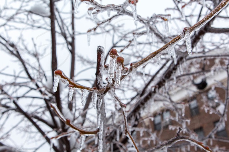 icicles on tree branch photo