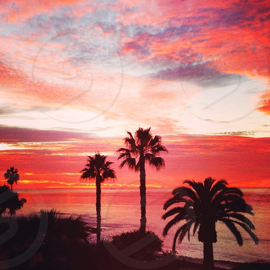 San Diego Sunsets Palm trees Golden hour photo