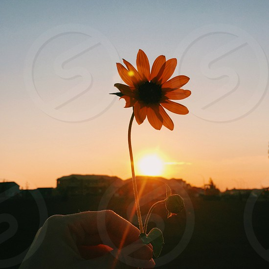 Flower weed sunset hand wanderlust yellow orange photo