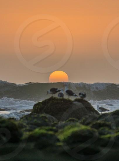 Sunset birds beach photo