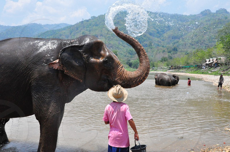 Im one of the guest of this park taking a oppurtunity to shower this elephant.  photo