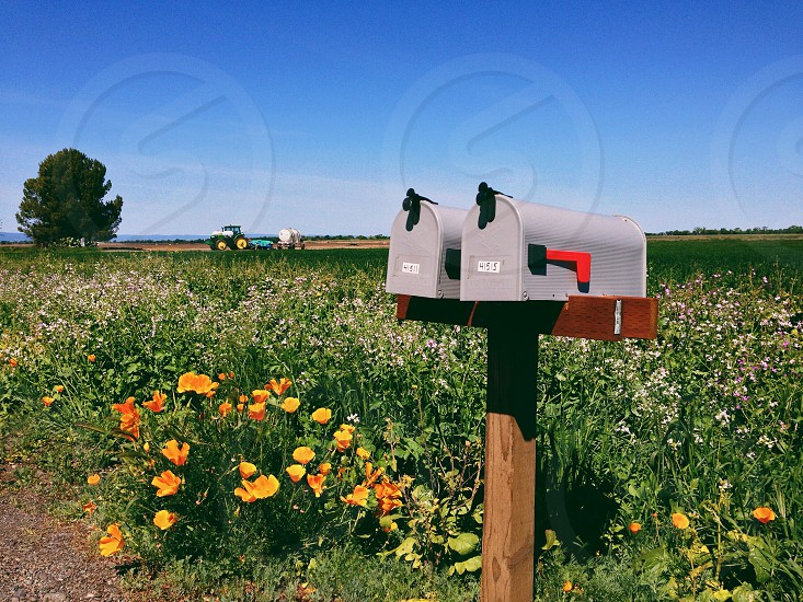 grey mailbox surrounded by orange flowers view photo