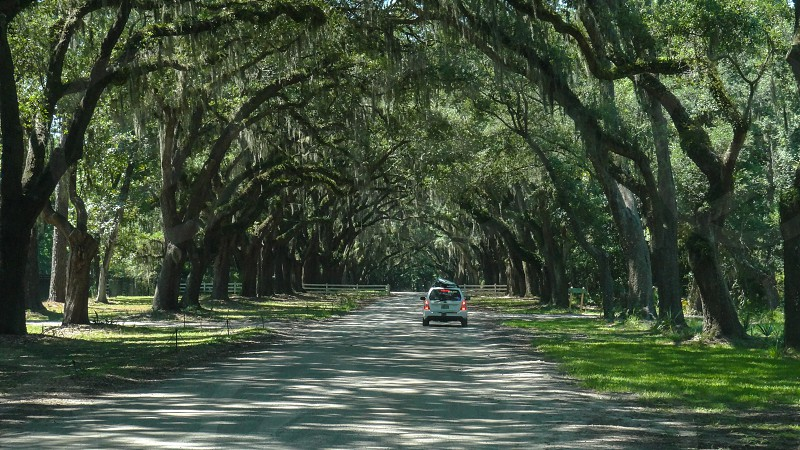 Plantation Trees Cedar Trees Camping Area Nature Ancient. Wormsloe Historic Site Savannah GA USA. photo