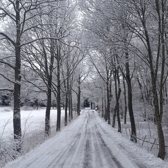 view of a snowy road with trees at the side photo