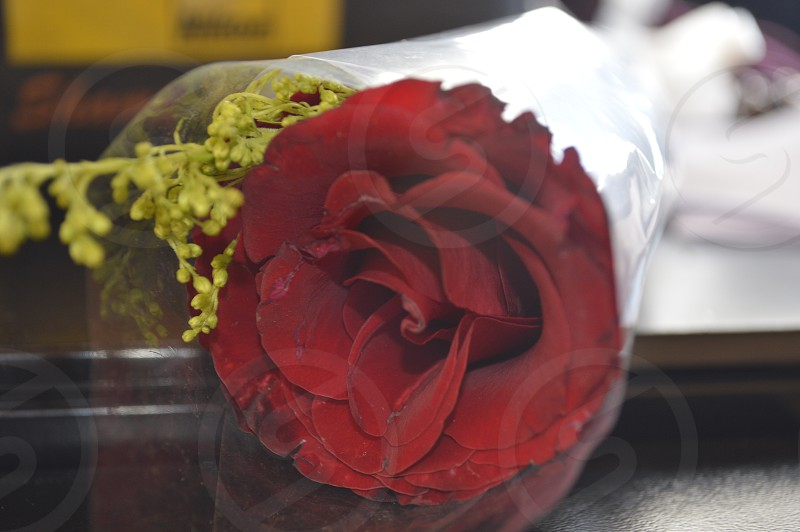 #photo #flower #nikon #canon #laptop  photo