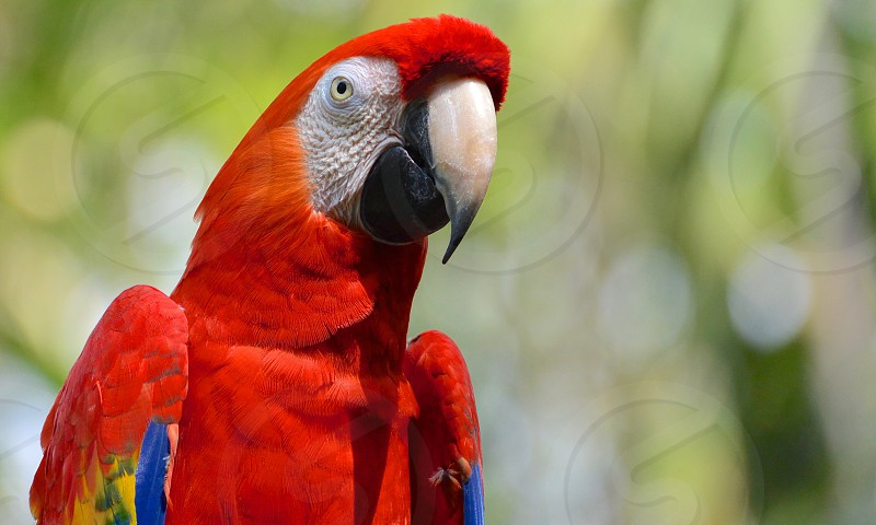 Parrot birds animals nature colors red  photo