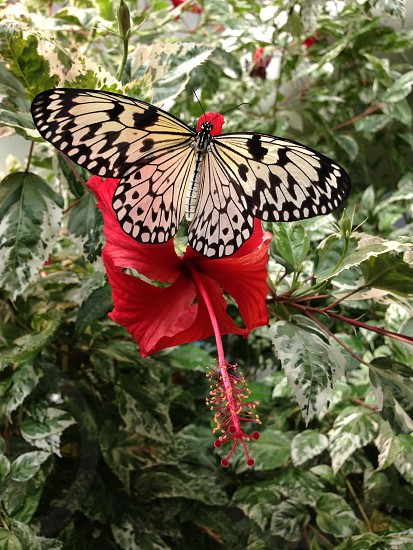 Butterfly on red... photo