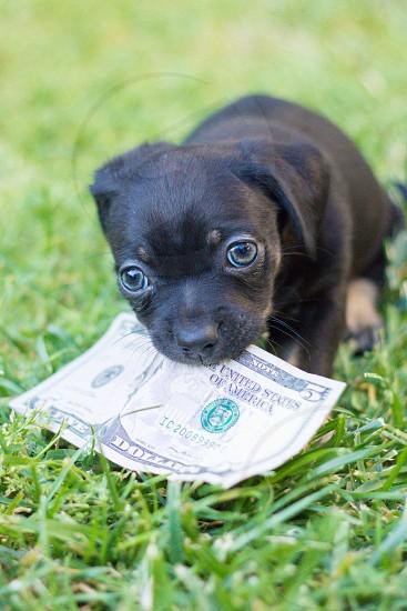small dog biting a 5 dollar bill photo