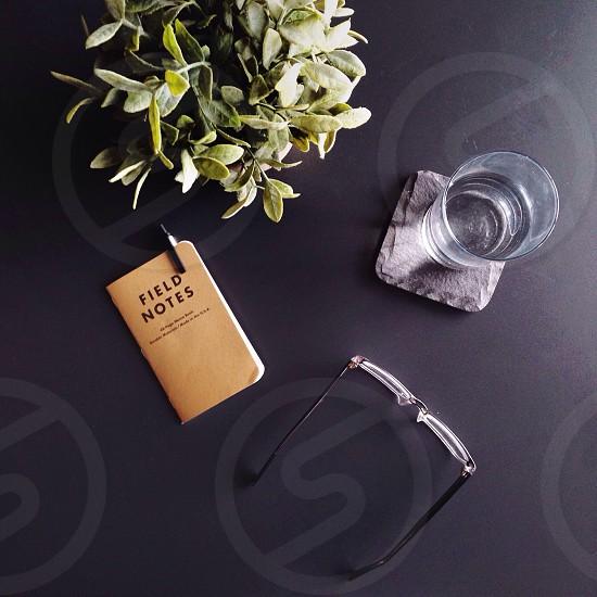 field notes glass glasses and plant on table photo