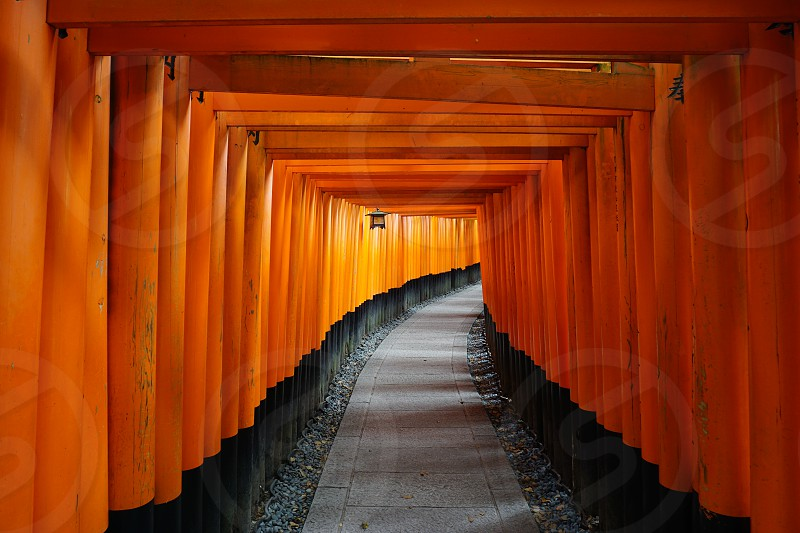 Getting inspired among the red tori gates at a shrine in Kyoto Japan photo