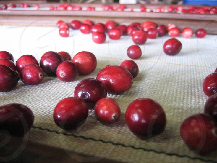 red fruit on white textile photo