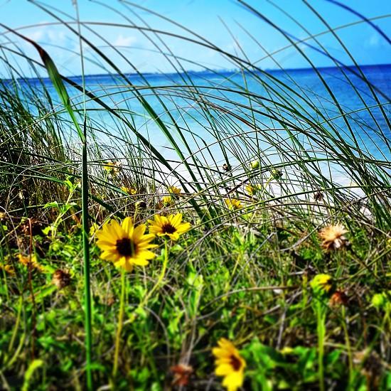 Honeymoon Island Beach FL photo