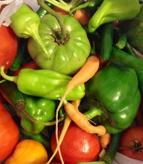Veggie harvest photo