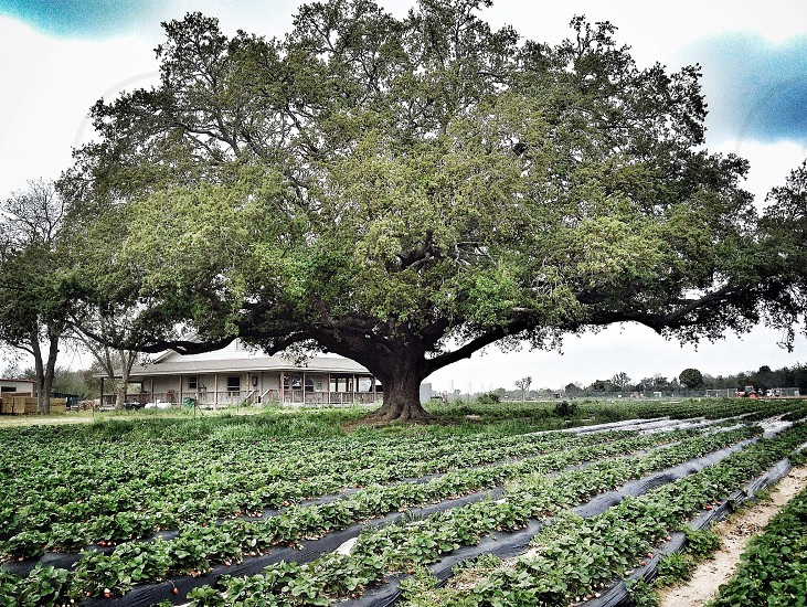 The tree of life photo