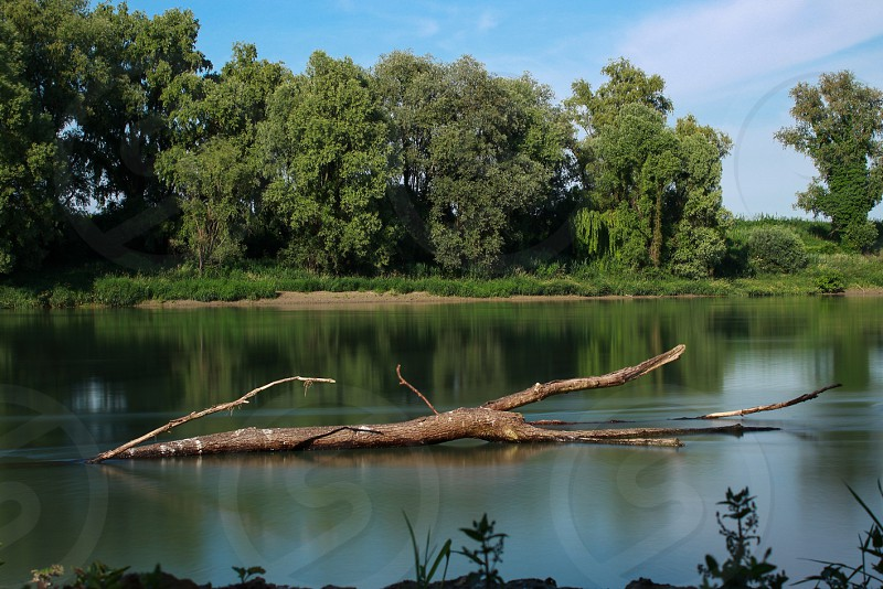 driftwood in water with trees in background below white clouds and blue sky during daytime photo