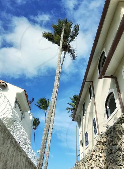house building palm tree tropical sky photo