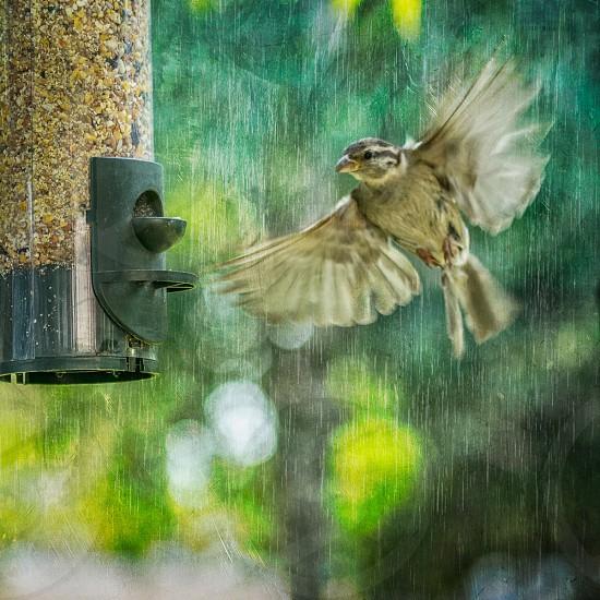 brown and black bird flying beside bird feeder photo
