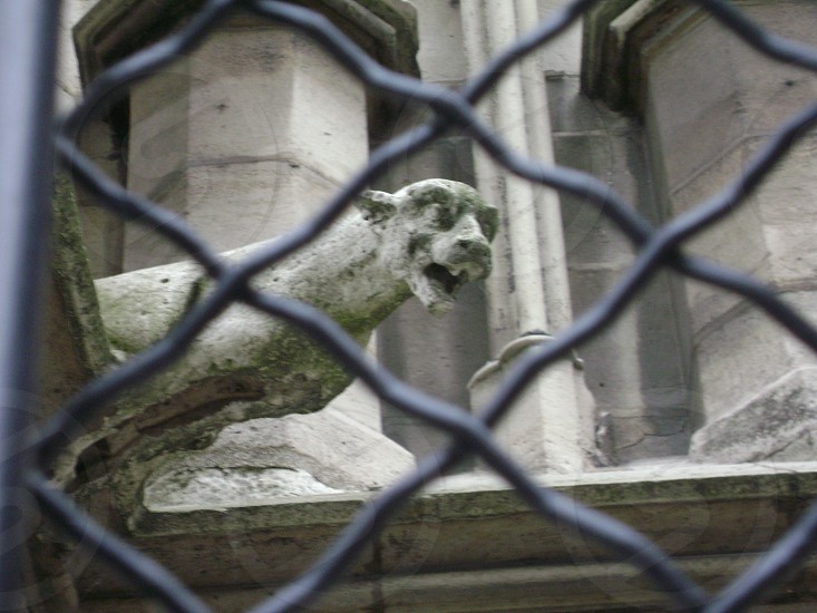 Gargoyle in Paris  photo