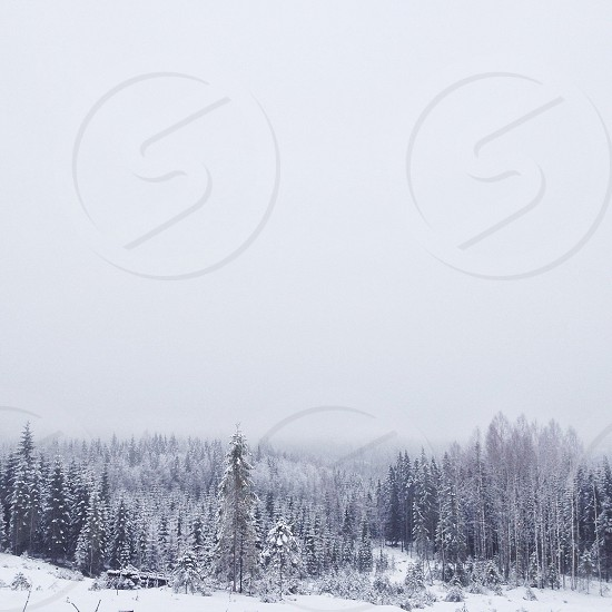 white snow covered trees photo