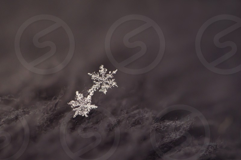 Close up of two snowflakes on a black background. photo