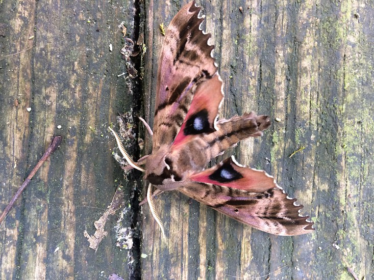 Unknown type of moth.  photo