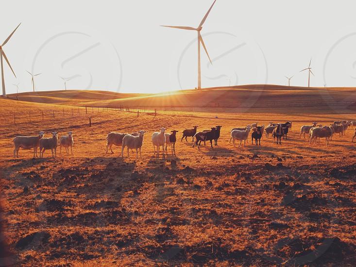 white wind turbines photo