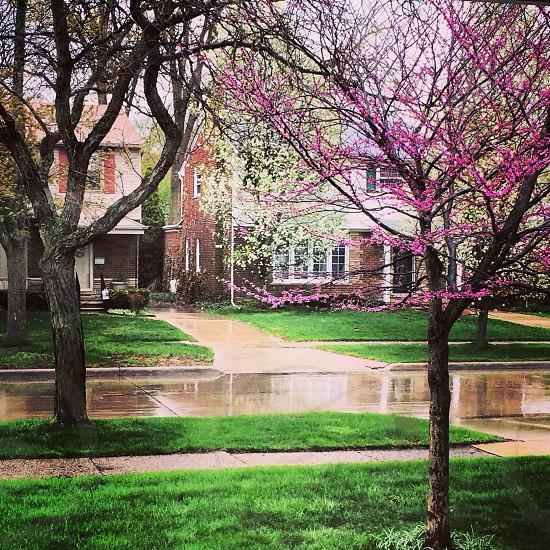 Michigan Spring  photo