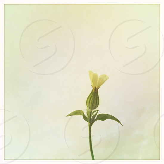 small white flower with green leaves photo