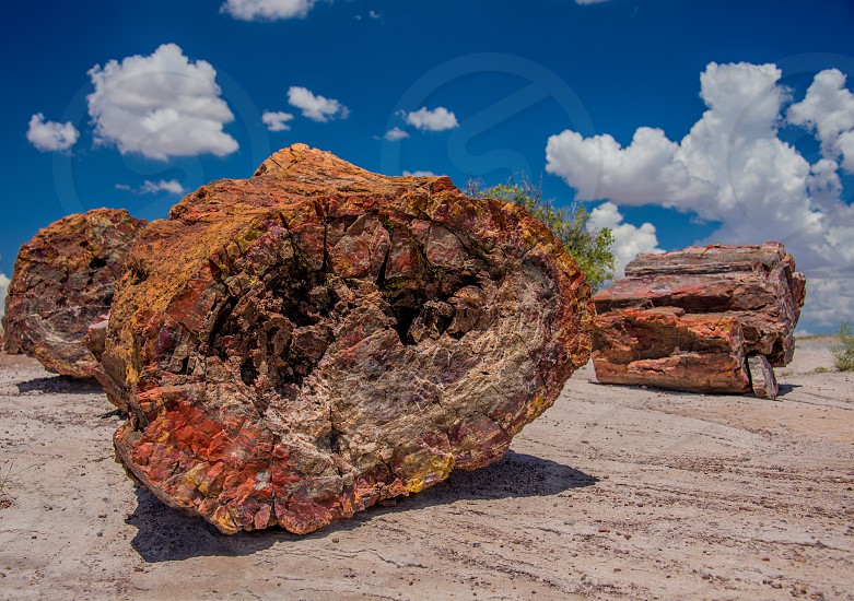 Petrified wood. photo