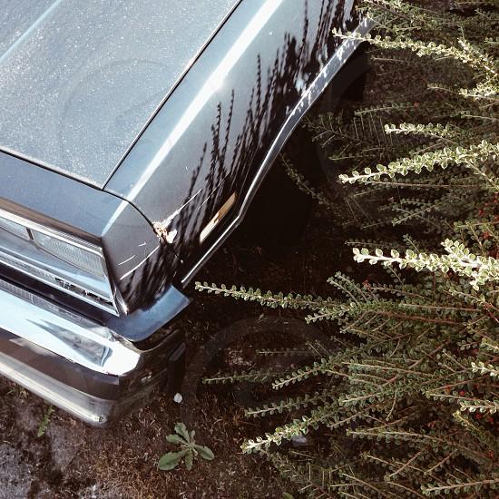 gray passenger car and bushes photo