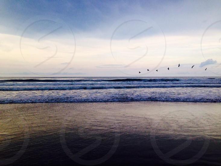 black birds flying over ocean photo