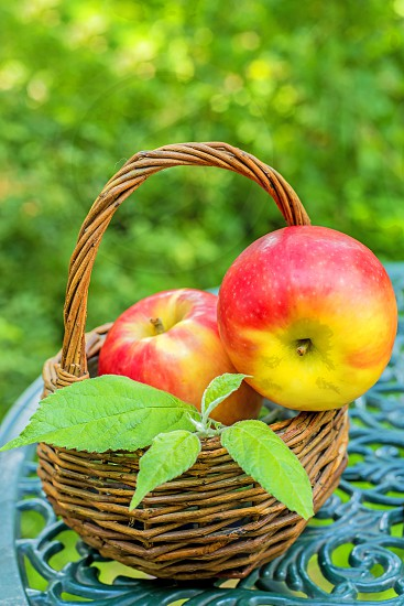 ripe apples in a basket on a garden table photo