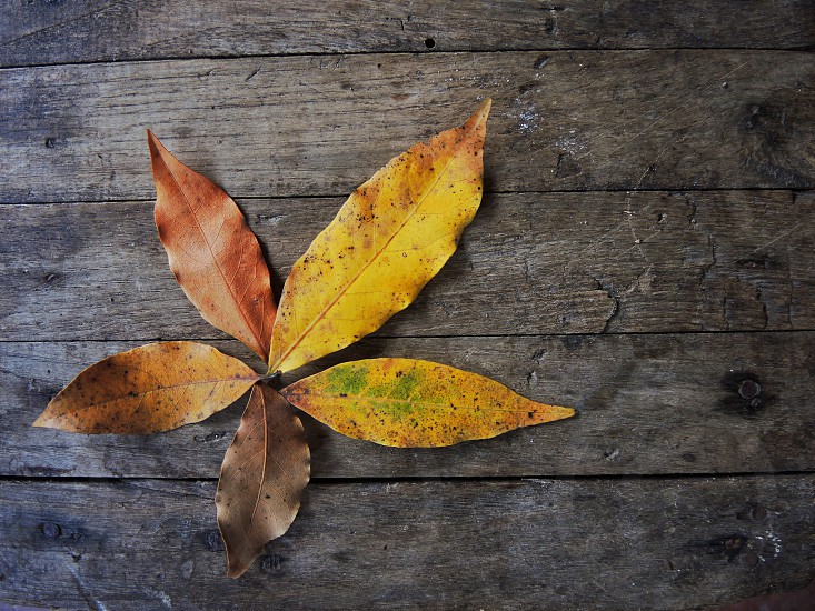 brown and yellow leaves photo