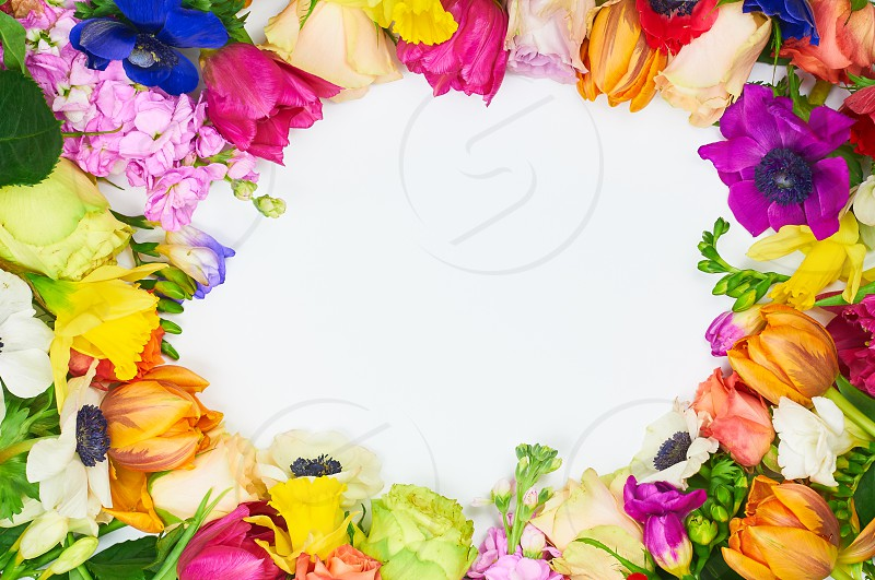 Beautiful spring background with free space for text. Flowers frame in white background. Frame: different colorful flowers on the white background photo