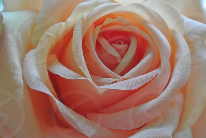 Floral Meditation photo
