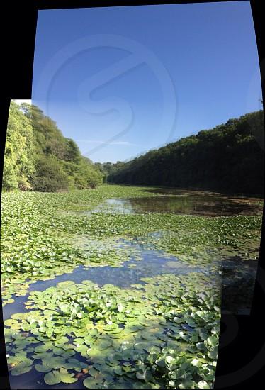 Green lily pad lake photo