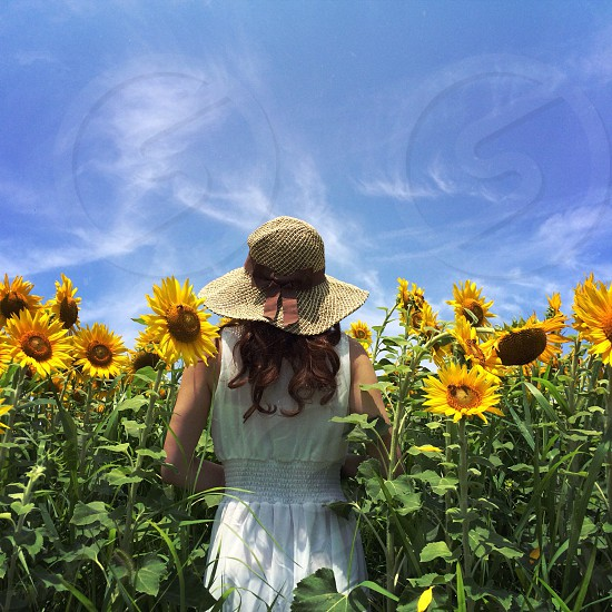 woman in white dress standing beside sunflowers photo