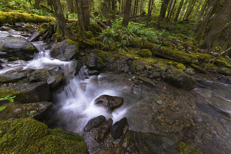 Pacific North West Rain Forest Waterfalls Snoqualmie National Forest Washington State USA.   photo