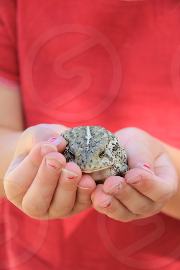 A toad in hand photo